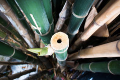 Bamboo green forest background. Bamboo green forest summer background royalty free stock photos