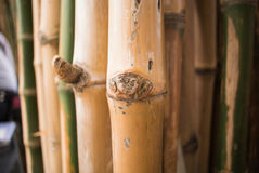 Bamboo green forest background Stock Images