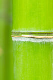 Bamboo green forest Stock Photos