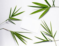 Bamboo green leaf and blank postcard. Bamboo leaf top view on white background. Bamboo decor. Spa or beauty banner template with place for text. Blank card stock image