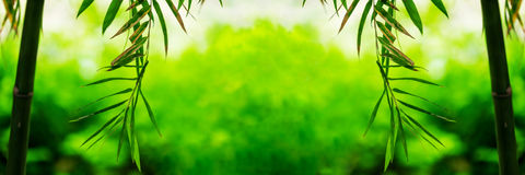 Bamboo green leaf soft blurred Royalty Free Stock Photos