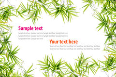 Bamboo green leaves frame Royalty Free Stock Photos