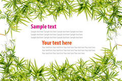 bamboo green leaves frame Royalty Free Stock Images