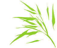 Bamboo green leaves illustration Royalty Free Stock Images