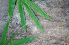 Bamboo green leaves on old wood background. Bamboo leaves green on an old wood background, used as a background Royalty Free Stock Photo