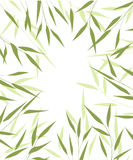 Bamboo green leaves Royalty Free Stock Images
