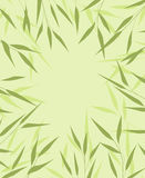 Bamboo green leaves Stock Images