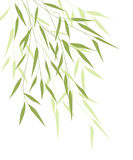 Bamboo green leaves Stock Photos