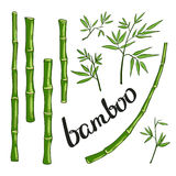 Bamboo with green leaves. vector illustration Stock Photos