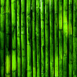 Bamboo. Green tropical nature background Stock Photography