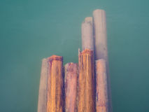 Bamboo in green water. (vintage Stock Image