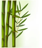 Bamboo on the green and white background. Royalty Free Stock Photography