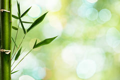 Bamboo grfass against green backgrounds Stock Images