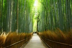 Bamboo groove Stock Photos