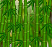 The Bamboo grove Stock Images