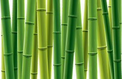 Bamboo Grove vector illustration