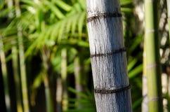 Bamboo Grove Royalty Free Stock Photos
