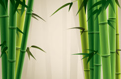 Bamboo Grove. Fresh bamboo grove  illustration.  Only applied in gradient Stock Photo