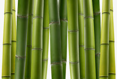 Bamboo Grove. A serene almost three dimensional-looking grove of bamboo trees Royalty Free Stock Images
