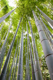 Bamboo grove Stock Photos