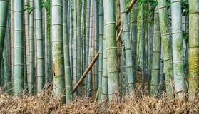 Bamboo Grove in Adashino Nenbutsu-ji Temple Stock Images