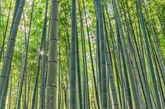 Bamboo Grove in Adashino Nenbutsu-ji Temple Royalty Free Stock Photography