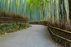 Bamboo Grove at Arashiyama in Kyoto Royalty Free Stock Images