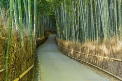 Bamboo Grove at Arashiyama in Kyoto Stock Photography