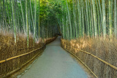 Bamboo Grove at Arashiyama in Kyoto Stock Photos