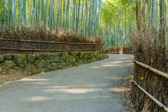 Bamboo Grove at Arashiyama in Kyoto Royalty Free Stock Photography