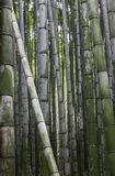 Bamboo Grove, Arashiyama, Kyoto Royalty Free Stock Photography
