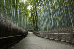 Bamboo grove in Arashiyama in Kyoto, Japan. Near the famous Tenryu-ji temple. Tenryuji is a Zen Buddhist temple which means temple of the heavenly dragon and is royalty free stock photography