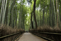 Bamboo grove in Arashiyama in Kyoto, Japan Stock Photo