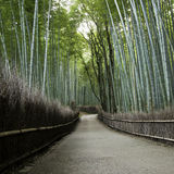 Bamboo grove in Arashiyama in Kyoto, Japan Royalty Free Stock Photos