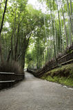 Bamboo grove in Arashiyama in Kyoto, Japan Royalty Free Stock Photo