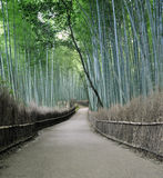 Bamboo grove in Arashiyama in Kyoto, Japan. Near the famous Tenryu-ji temple. Tenryuji is a Zen Buddhist temple which means temple of the heavenly dragon and is Royalty Free Stock Image