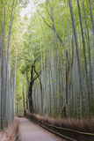 Bamboo Grove, Arashiyama, Kyoto. Vertical shot of Arashiyama's Bamboo Grove in Kyoto, Japan Stock Image