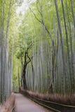 Bamboo Grove, Arashiyama, Kyoto Stock Image
