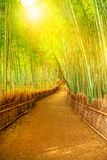 Bamboo grove Arashiyama. Bamboo grove at Sagano in Arashiyama in sunlit. The forest is Kyoto`s second most popular tourist destination and among the 100 phonetic Stock Photo
