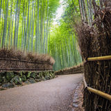 Bamboo Grove in Arashyama. A path through the Arashyama Bamboo grove in Kyoto Royalty Free Stock Photos