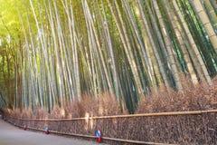 Bamboo grove in autumn season at Arashiyama in Kyoto. Beautiful nature bamboo grove in autumn season at Arashiyama in Kyoto, Japan Stock Photo