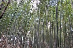 Bamboo  Grove or Bamboo forest of Arashiyama. Bamboo forest Srashiyama Kyoto Japan Royalty Free Stock Image