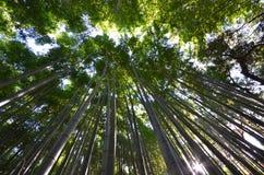Bamboo grove, bamboo forest at Arashiyama, Kyoto Stock Image