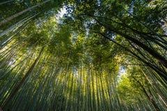 Bamboo grove, bamboo forest at Arashiyama. Kyoto, Japan Royalty Free Stock Image