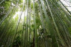 Bamboo grove, bamboo forest at Arashiyama, Kyoto Royalty Free Stock Photos