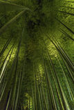 Bamboo grove, bamboo forest at Arashiyama, Kyoto, Japan Royalty Free Stock Photography