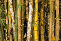 Bamboo Grove Details Stock Image