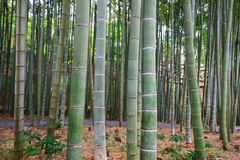 Bamboo Grove at Enkoji temple in Kyoto Stock Images