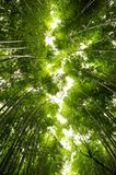 A bamboo grove that flows like a river,Kyoto, Japan royalty free stock image