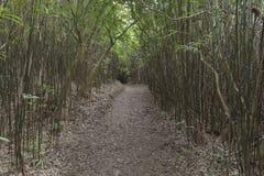 Bamboo grove. In Hong Kong Royalty Free Stock Photography